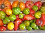 la folie des ... tomates...jpg